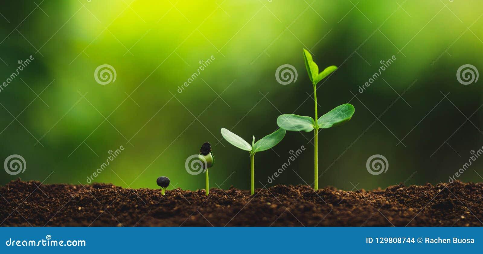 Plantatillväxt som planterar träd som bevattnar ett naturligt ljus för träd