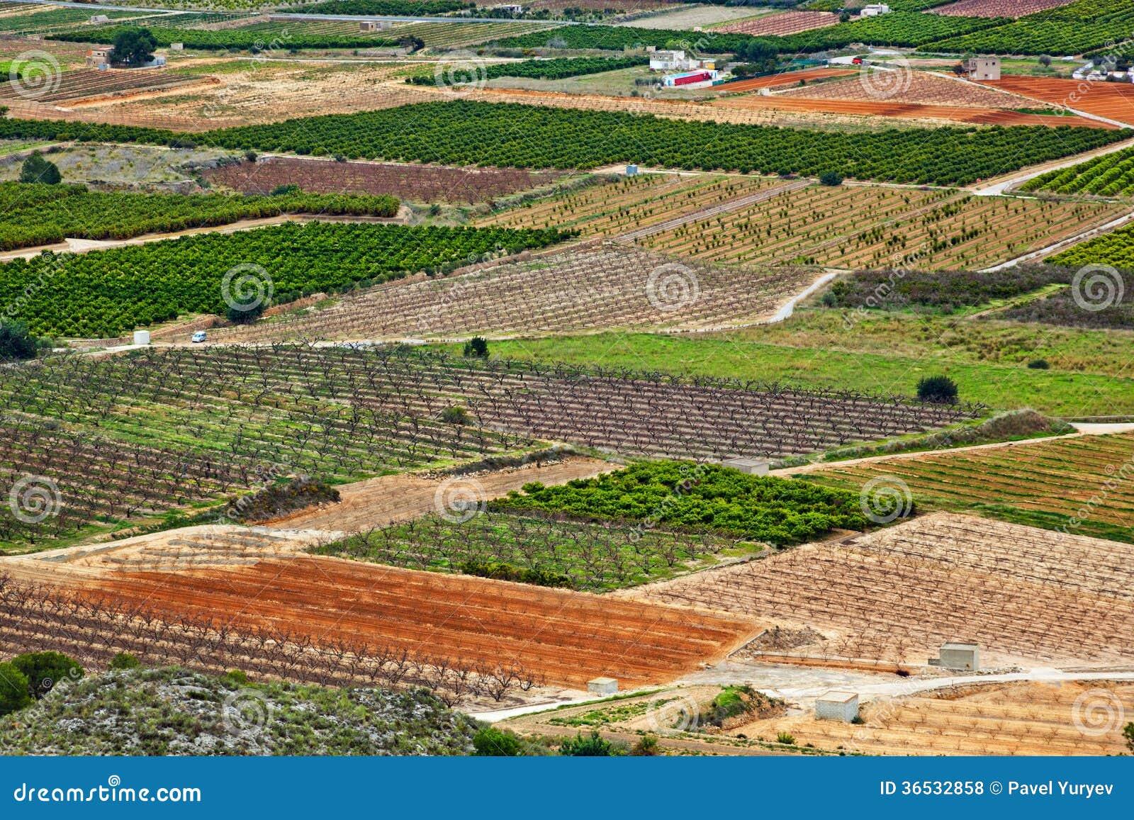 Plantation d 39 arbres fruitiers photo stock image du - Plantation d un fruitier ...