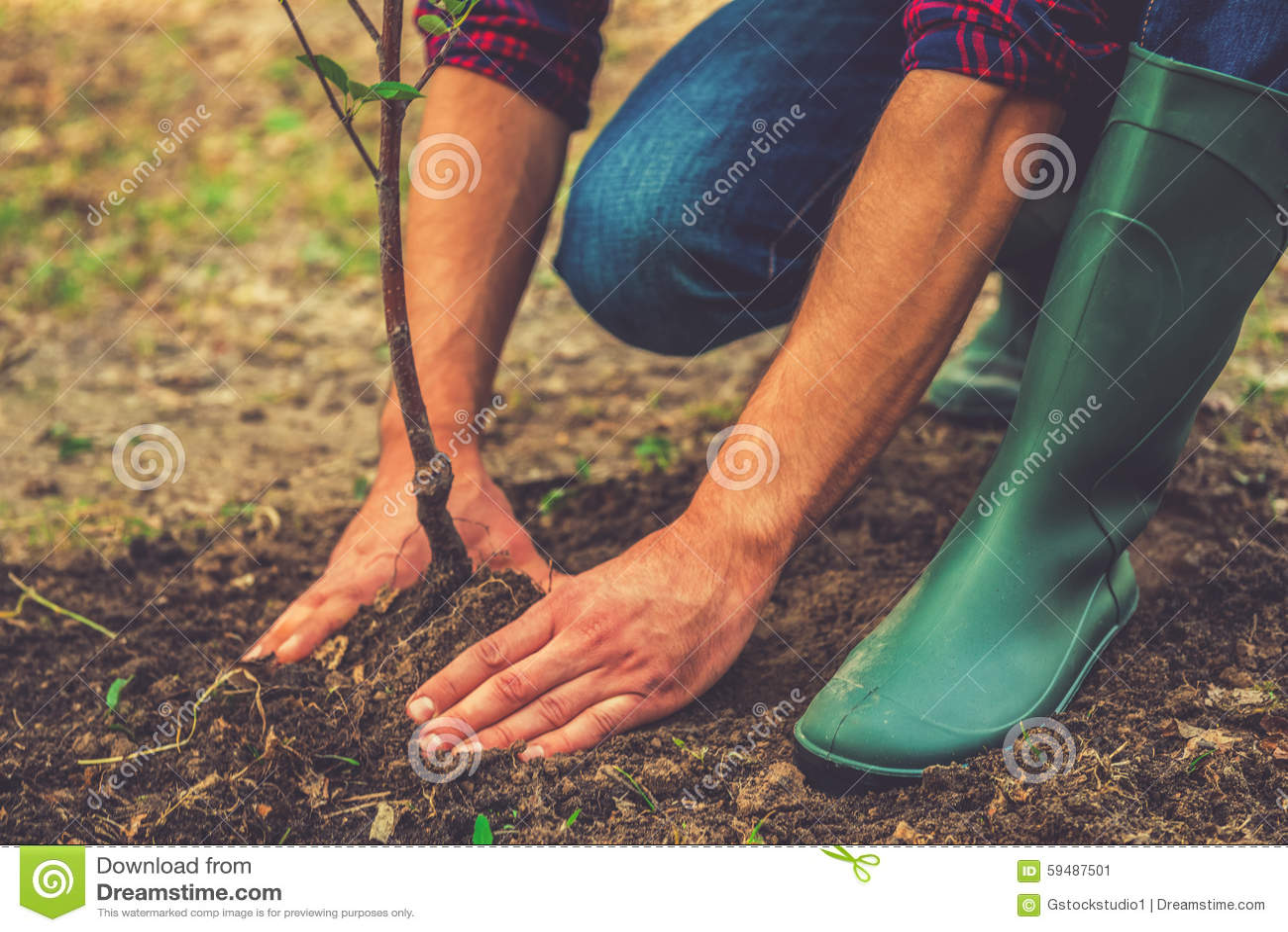 Plantation d un arbre