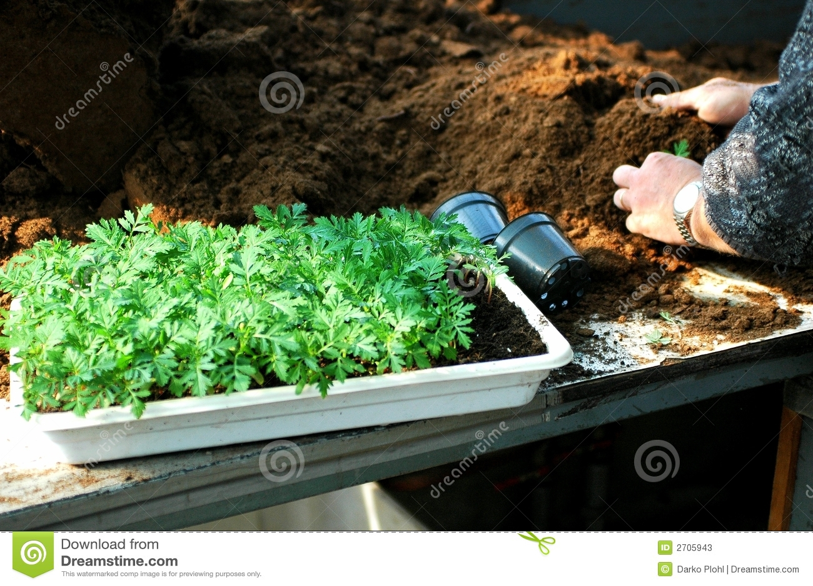 Plantation de bac