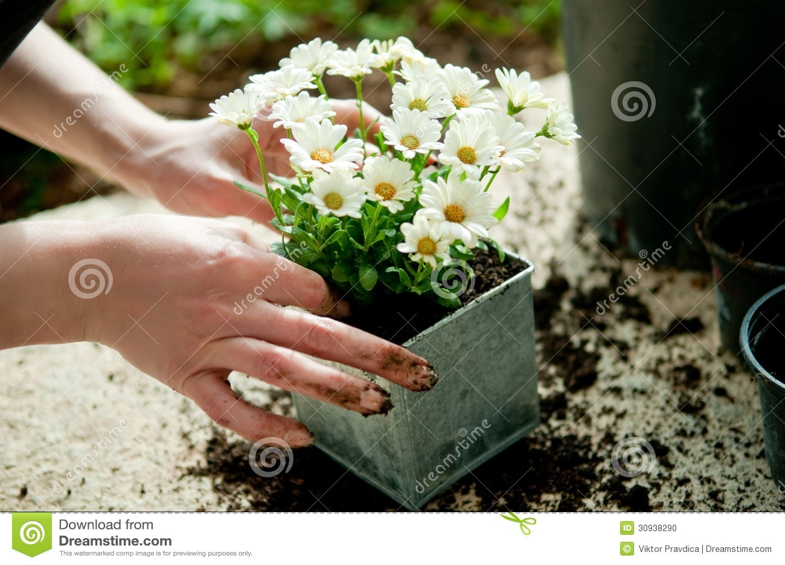 Plantation de la fleur photo stock image 30938290 for Plantation de fleurs