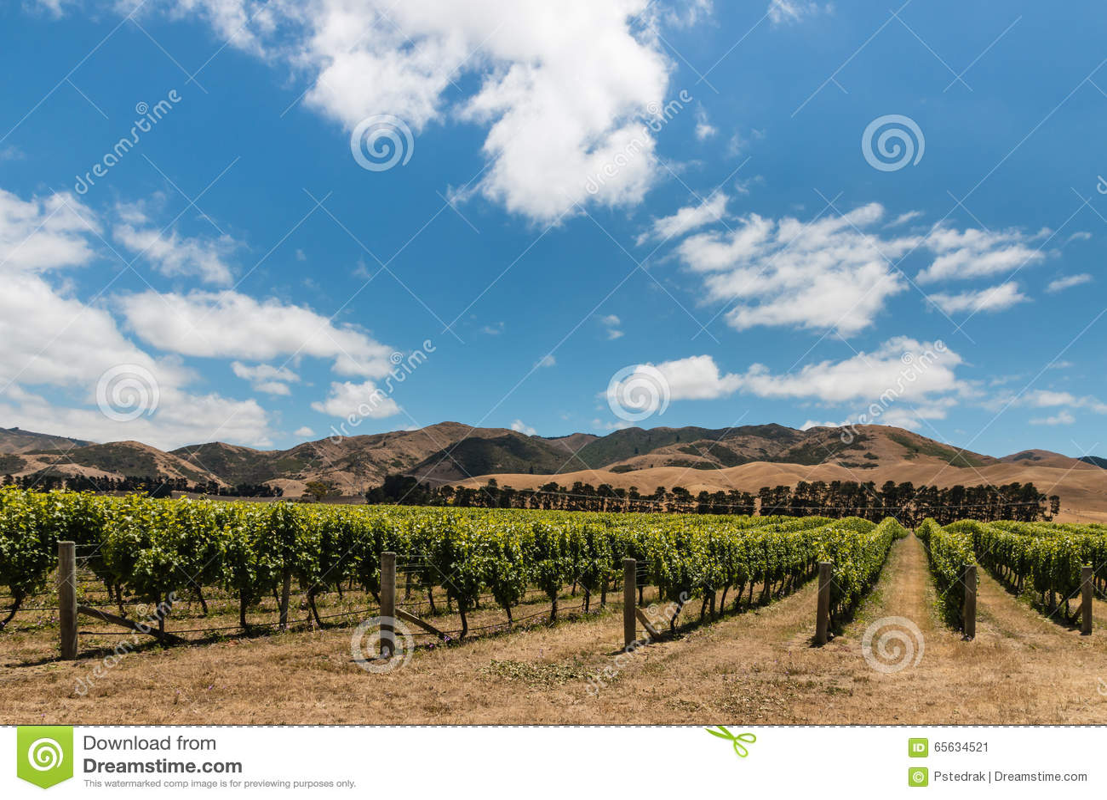 Plantation de vignoble en collines de Wither