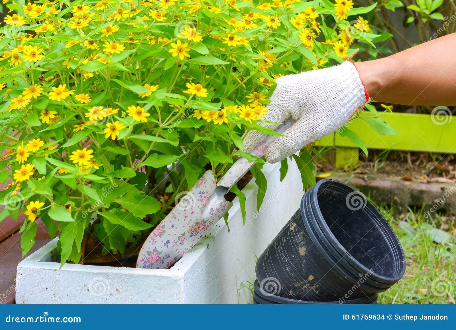 Plantation des fleurs dans un jardin photo stock image 61769634 for Plantation jardin