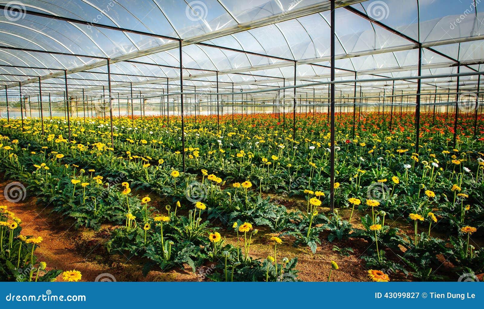 plantation des fleurs en serre chaude image stock image du ethnicity ville 43099827. Black Bedroom Furniture Sets. Home Design Ideas