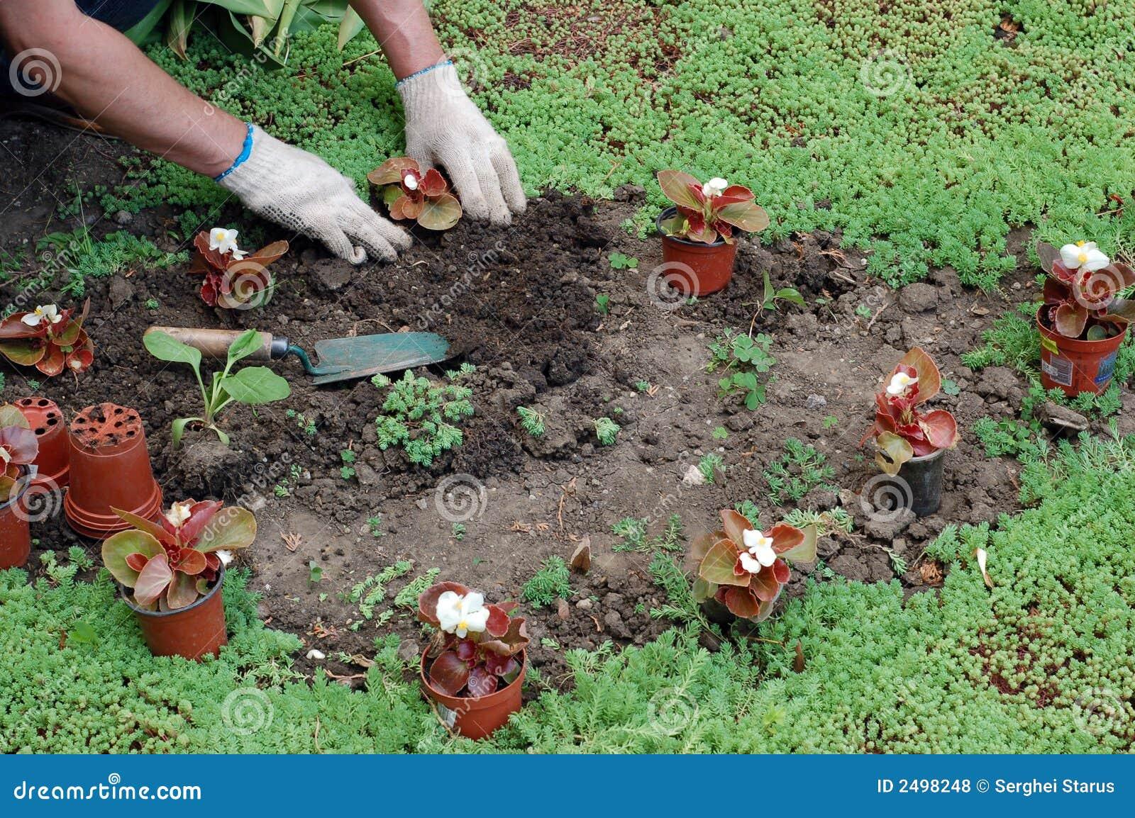 Plantation des plantes