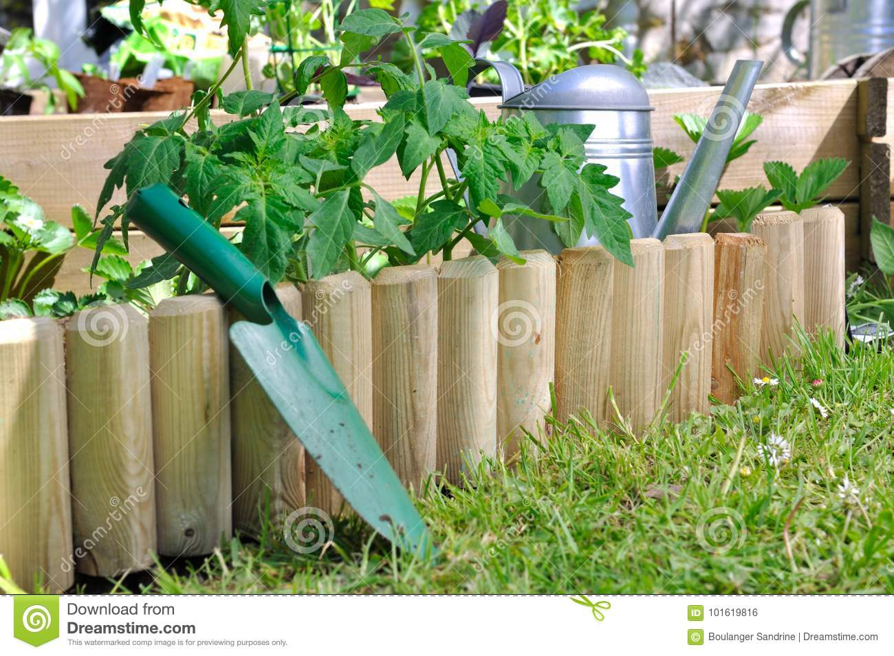 Download Plantation In Vegetable Patch Stock Photo   Image Of Planting,  Plants: 101619816