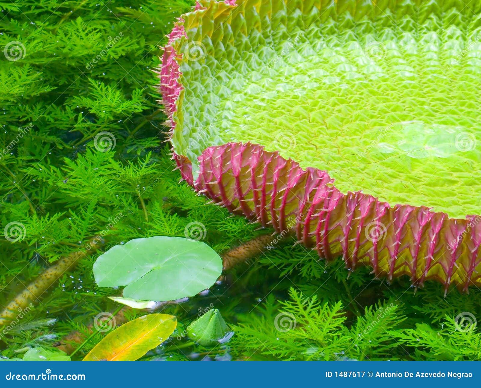 Plante aquatique photographie stock libre de droits image 1487617 - Noms de plantes aquatiques ...