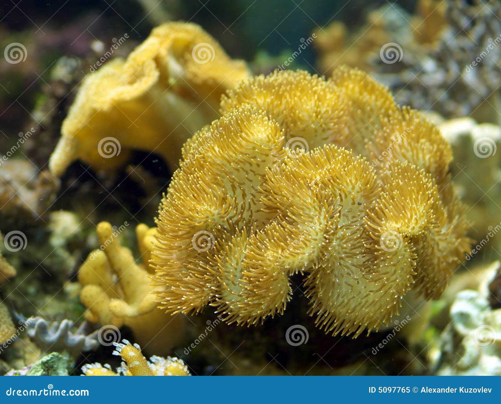 plante aquatique dans l 39 aquarium image stock image 5097765. Black Bedroom Furniture Sets. Home Design Ideas