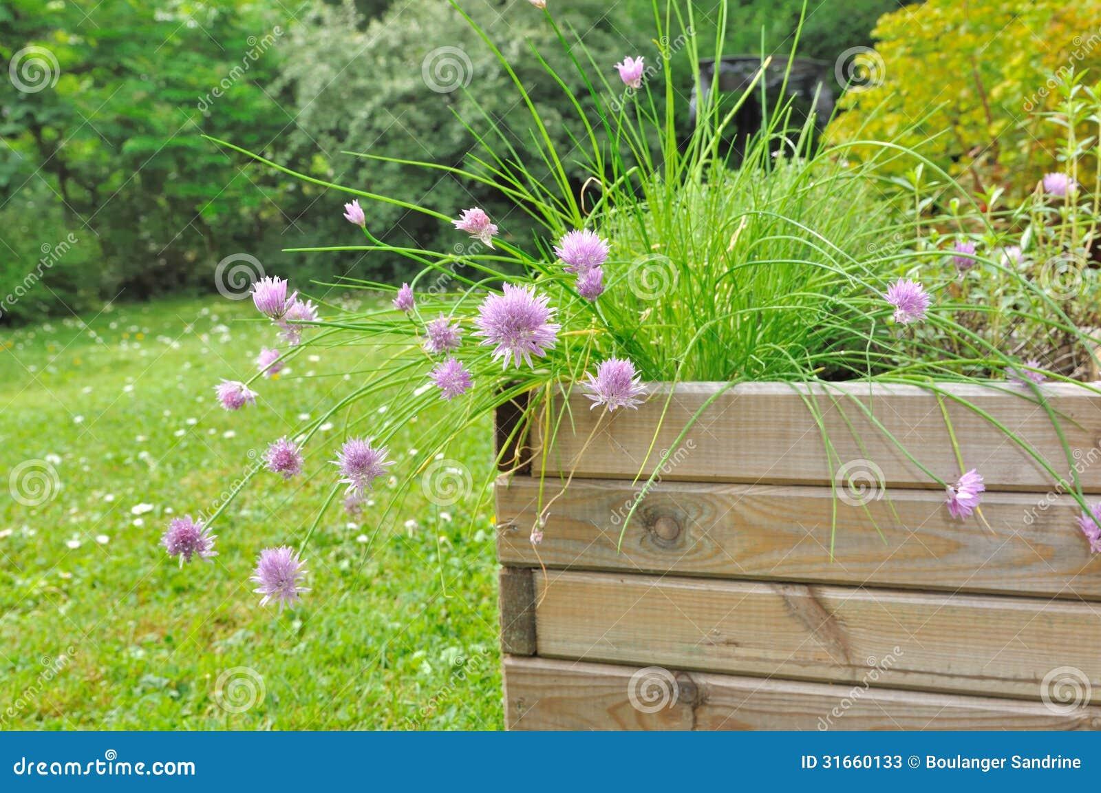 Plantes Aromatiques Sur Terrasse plante aromatique dans le planteur image stock - image du