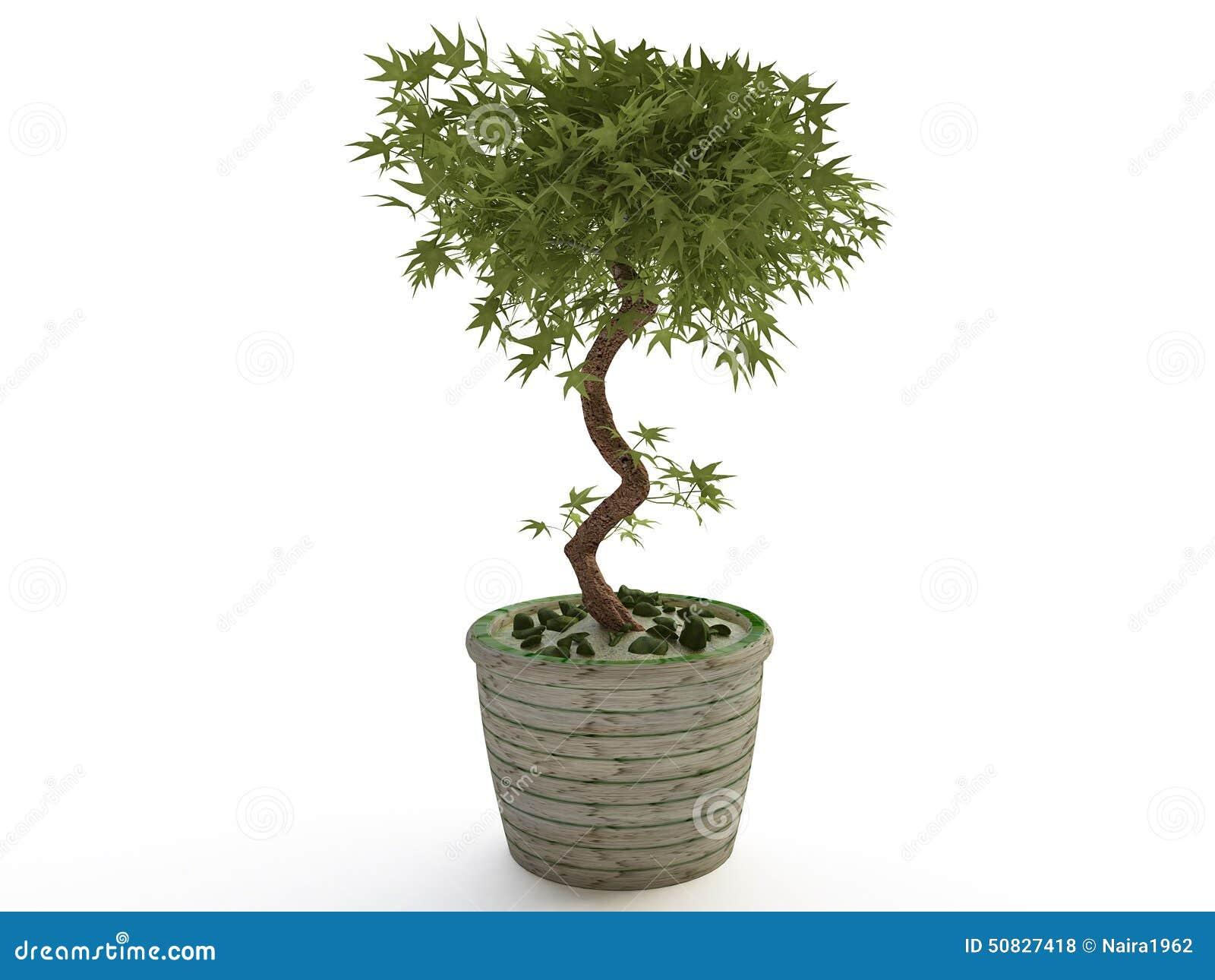 plante d 39 int rieur arbre de bonsa s dans le pot de fleur en c ramique illustration stock. Black Bedroom Furniture Sets. Home Design Ideas