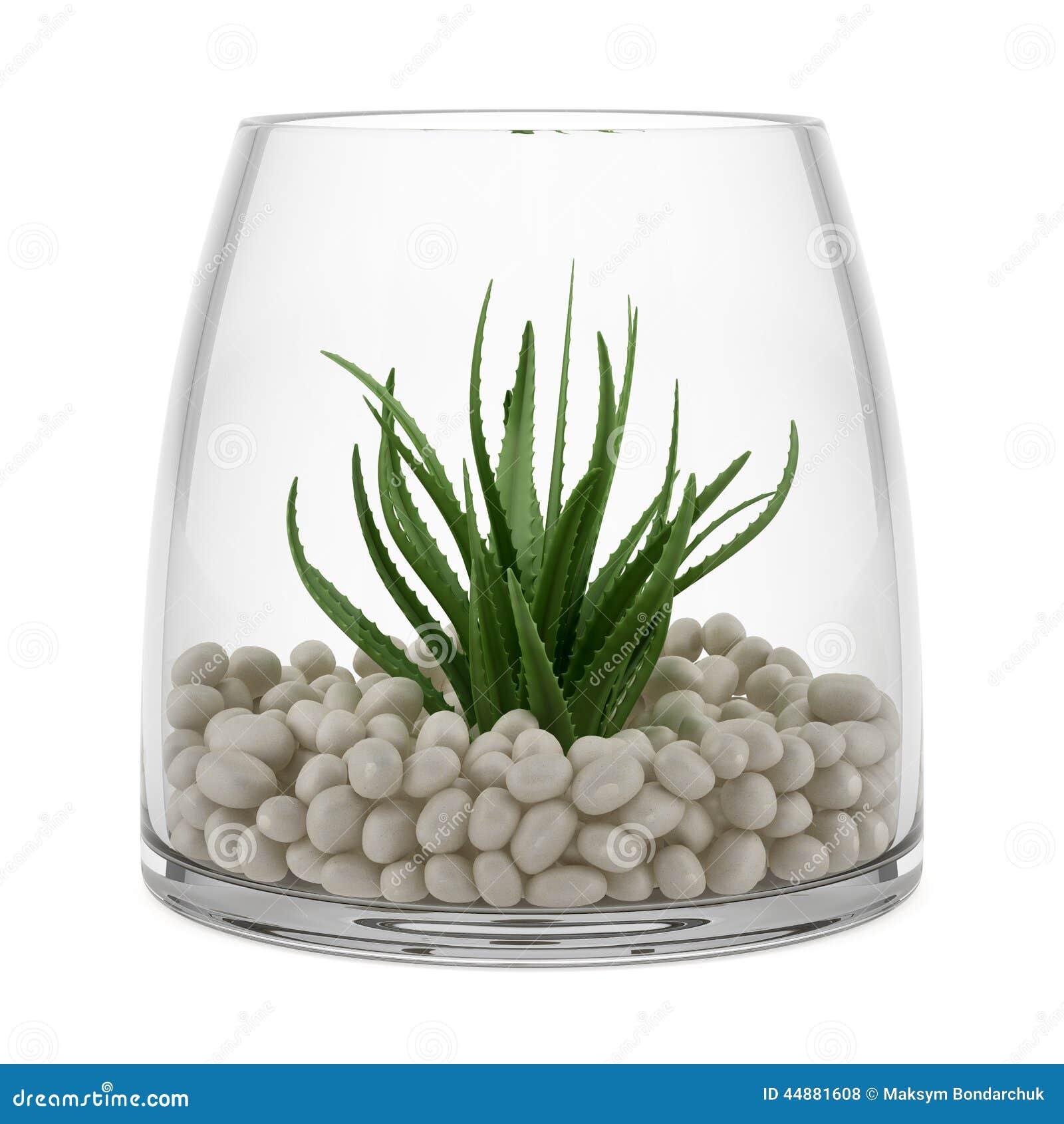 Plante d 39 int rieur dans le vase en verre d 39 isolement sur - Plante dans pot en verre ...