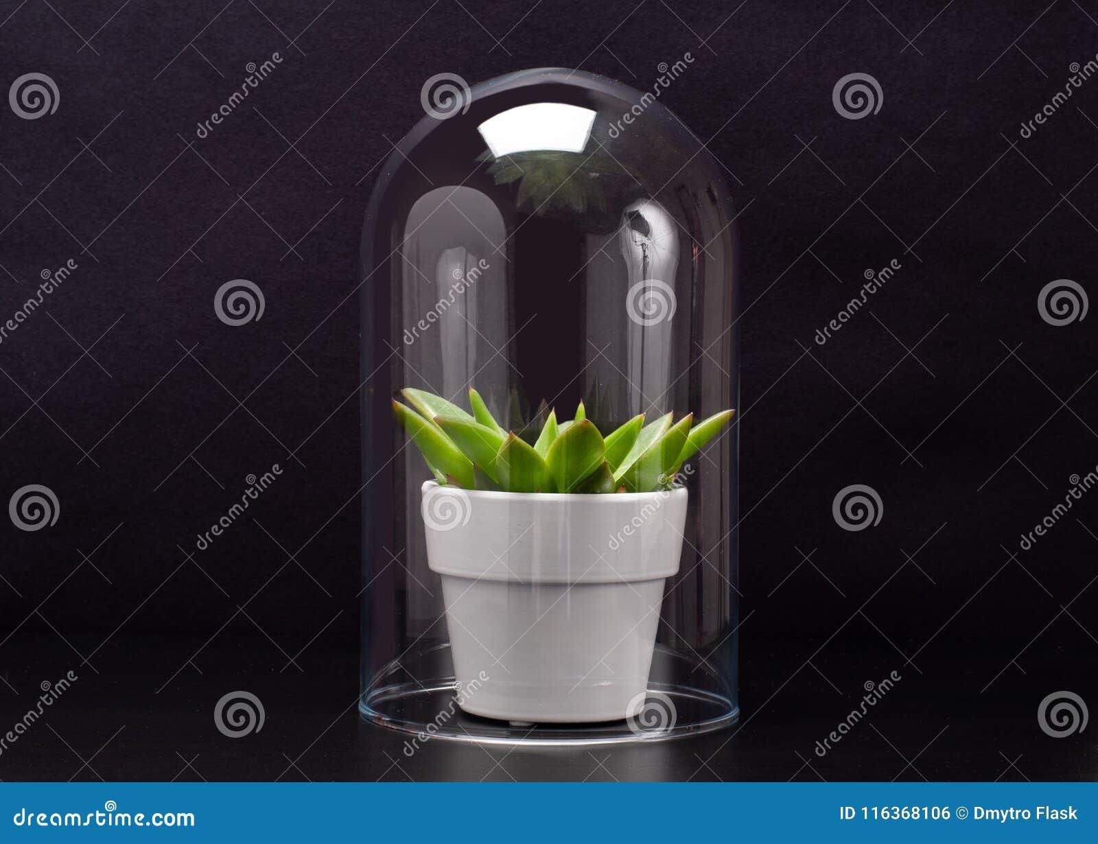 Plante D\'intérieur Succulente à L\'intérieur D\'une Mini-serre En ...