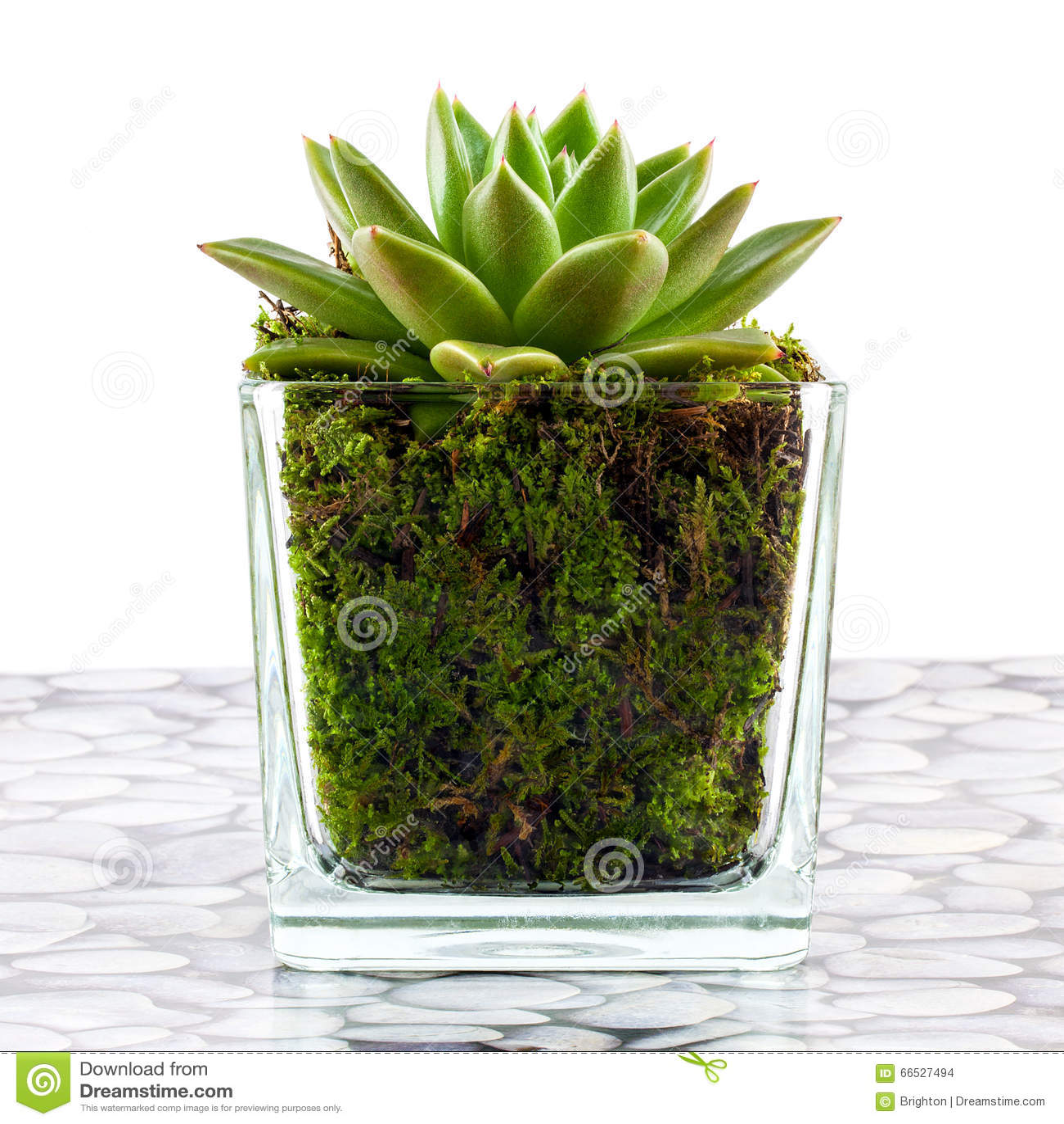 plante d 39 int rieur succulente photo stock image du. Black Bedroom Furniture Sets. Home Design Ideas