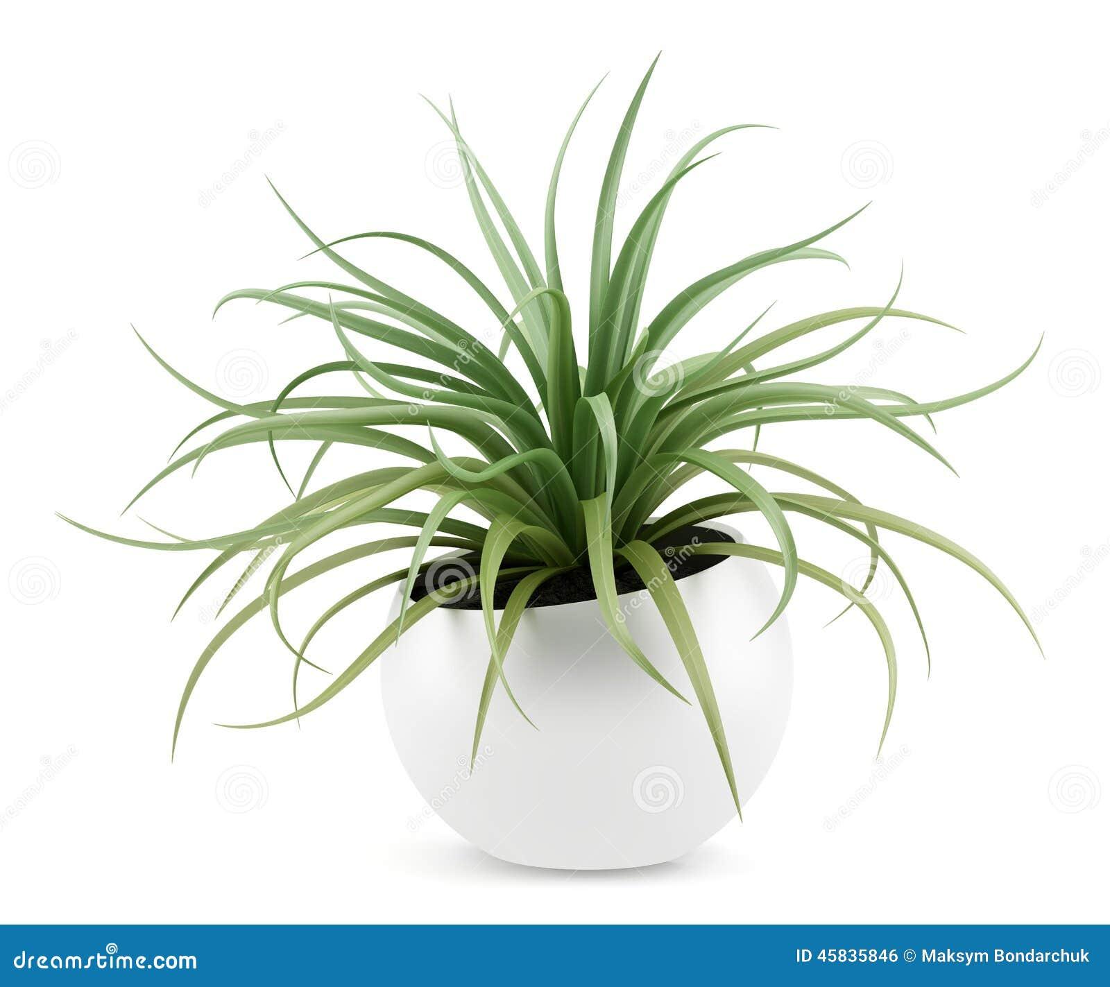 Plante d 39 int rieur dans le pot d 39 isolement sur le blanc - Pot de plante interieur ...