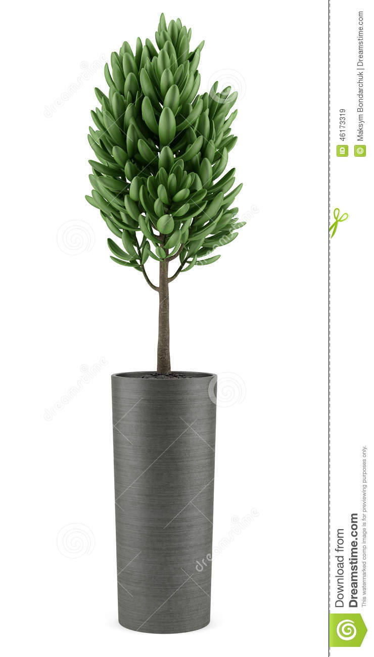 plante pot interieur