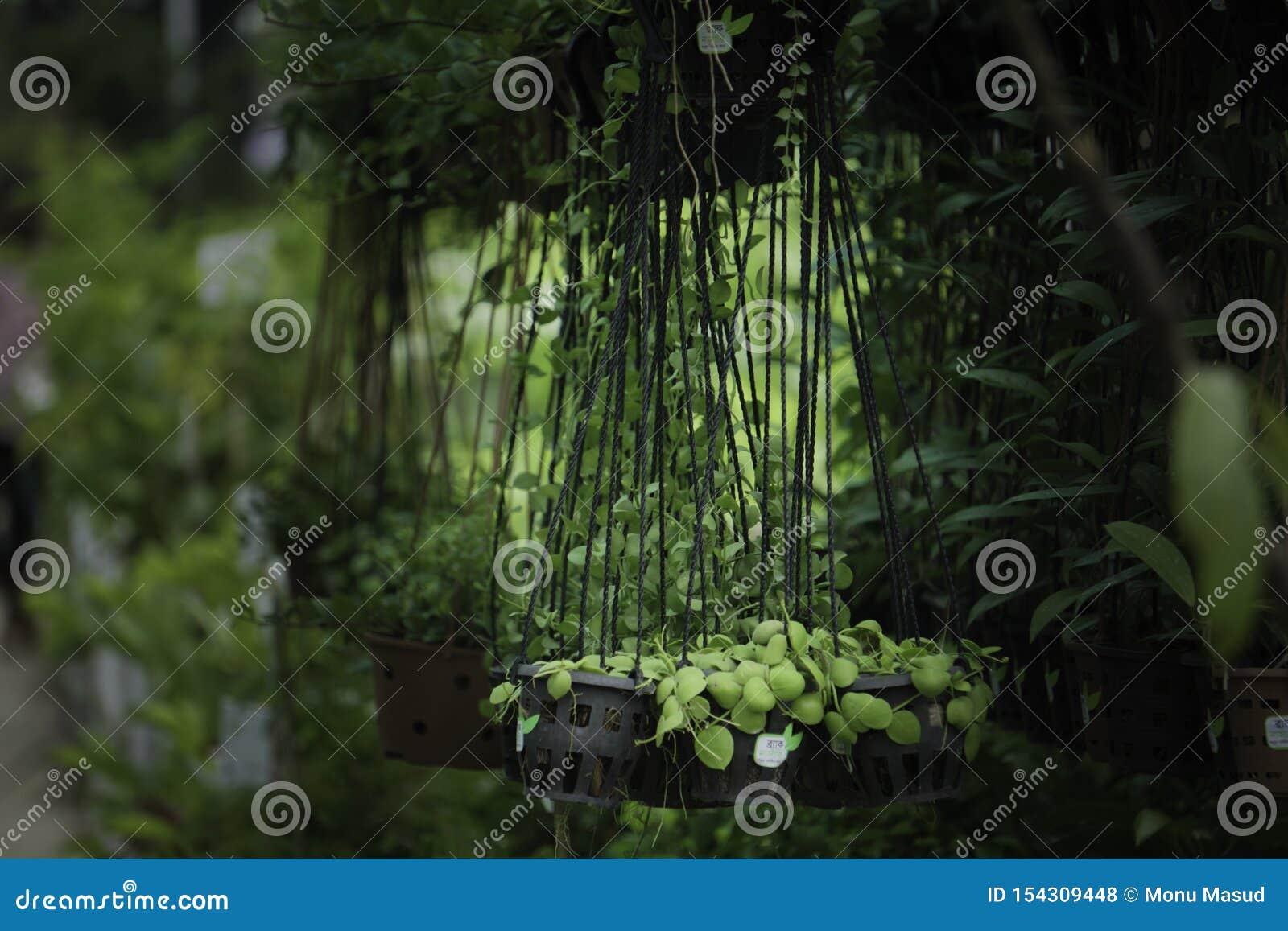 Véranda De Jardin Extérieur plante en pot accrochante de pépinière s'élevant sur la