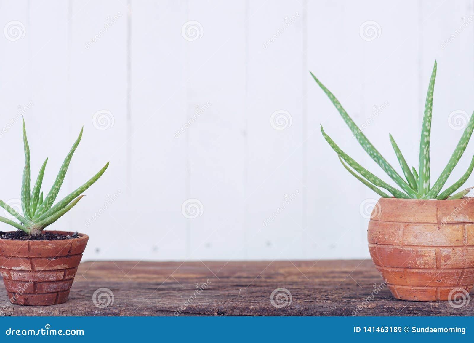 Pot Plante En Bois plante en pot de vera d'aloès sur la table en bois avec le