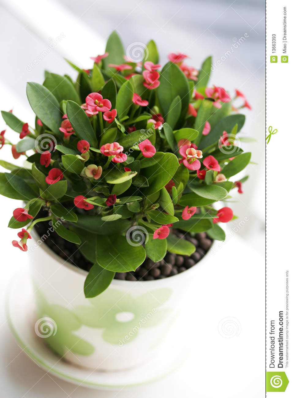 Plante en pot verte photos stock image 13663393 for Plante hivernale en pot