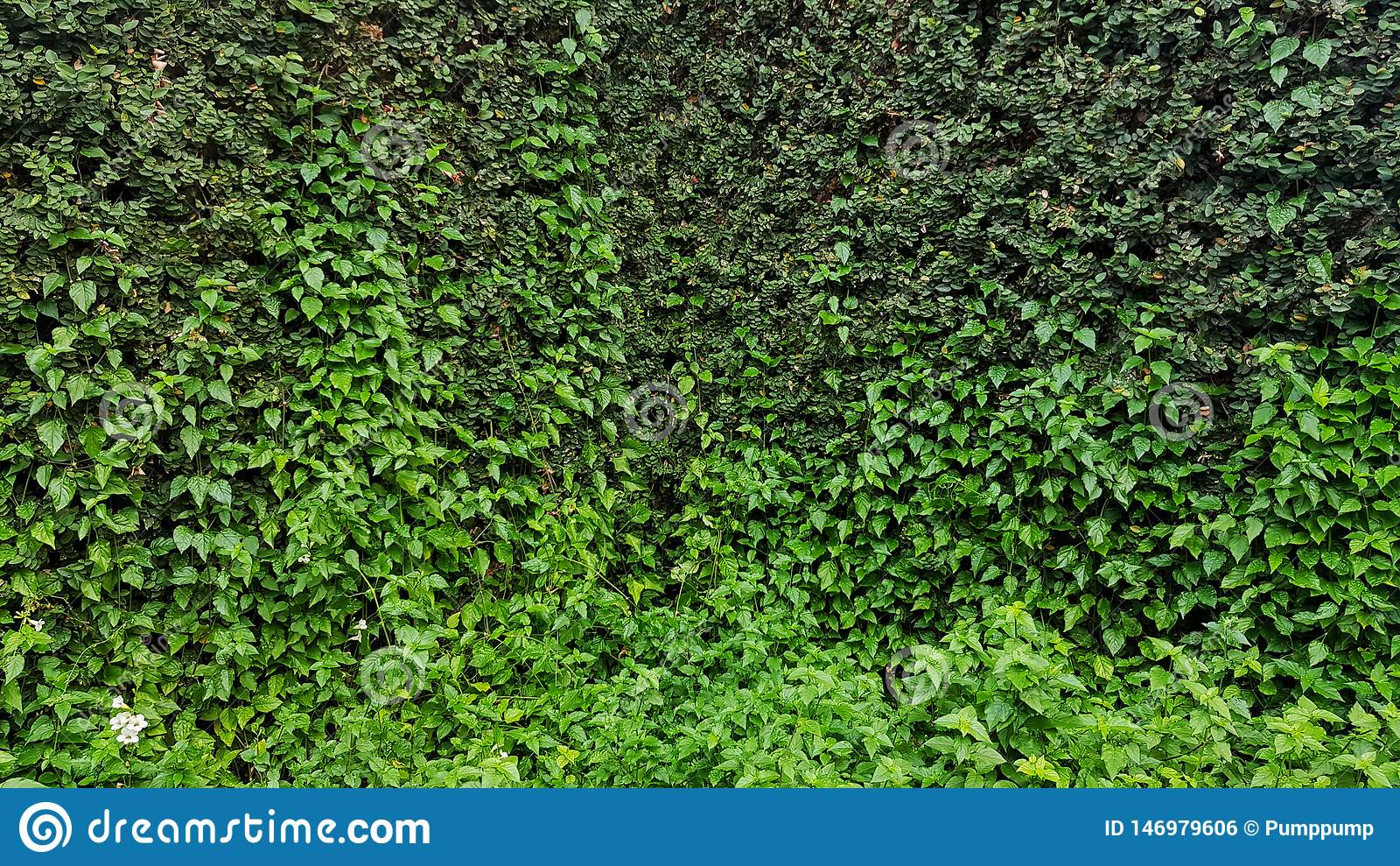 Plante Sur Les Murs plante et fleur sur le mur de nature pour le papier peint
