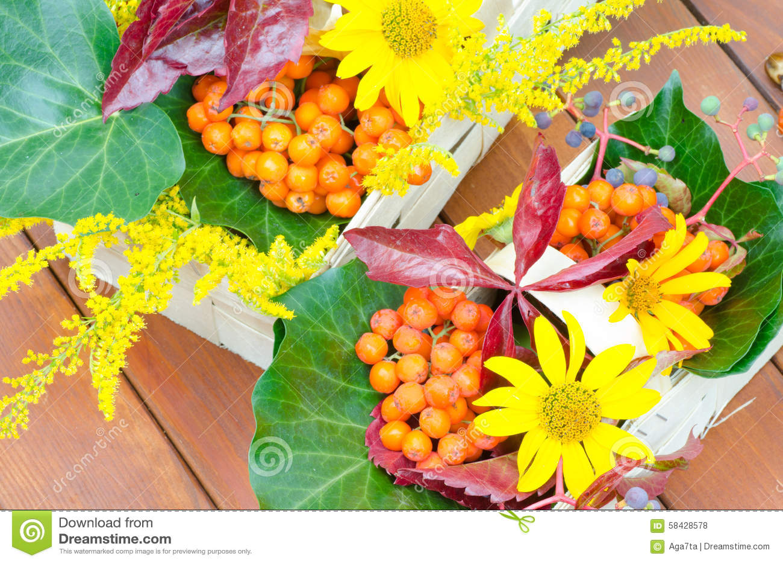 Plante et fleurs multicolores d 39 automne photo stock for Fleurs automne