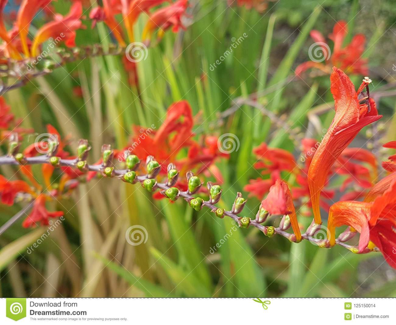 Plante Exotic Fleur Rouge Red Flower Stock Photo Image Of London