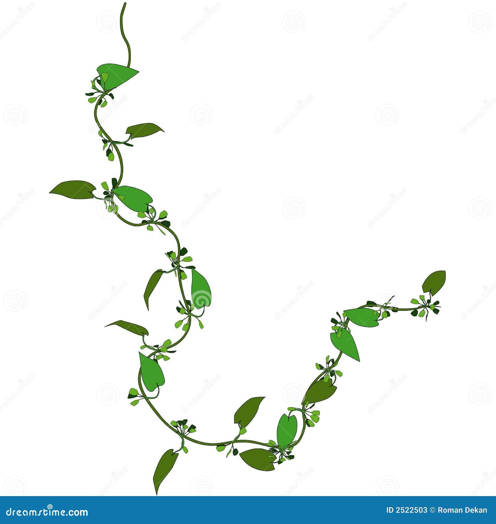 Plante grimpante 3 illustration de vecteur. Illustration du botanique - 2522503