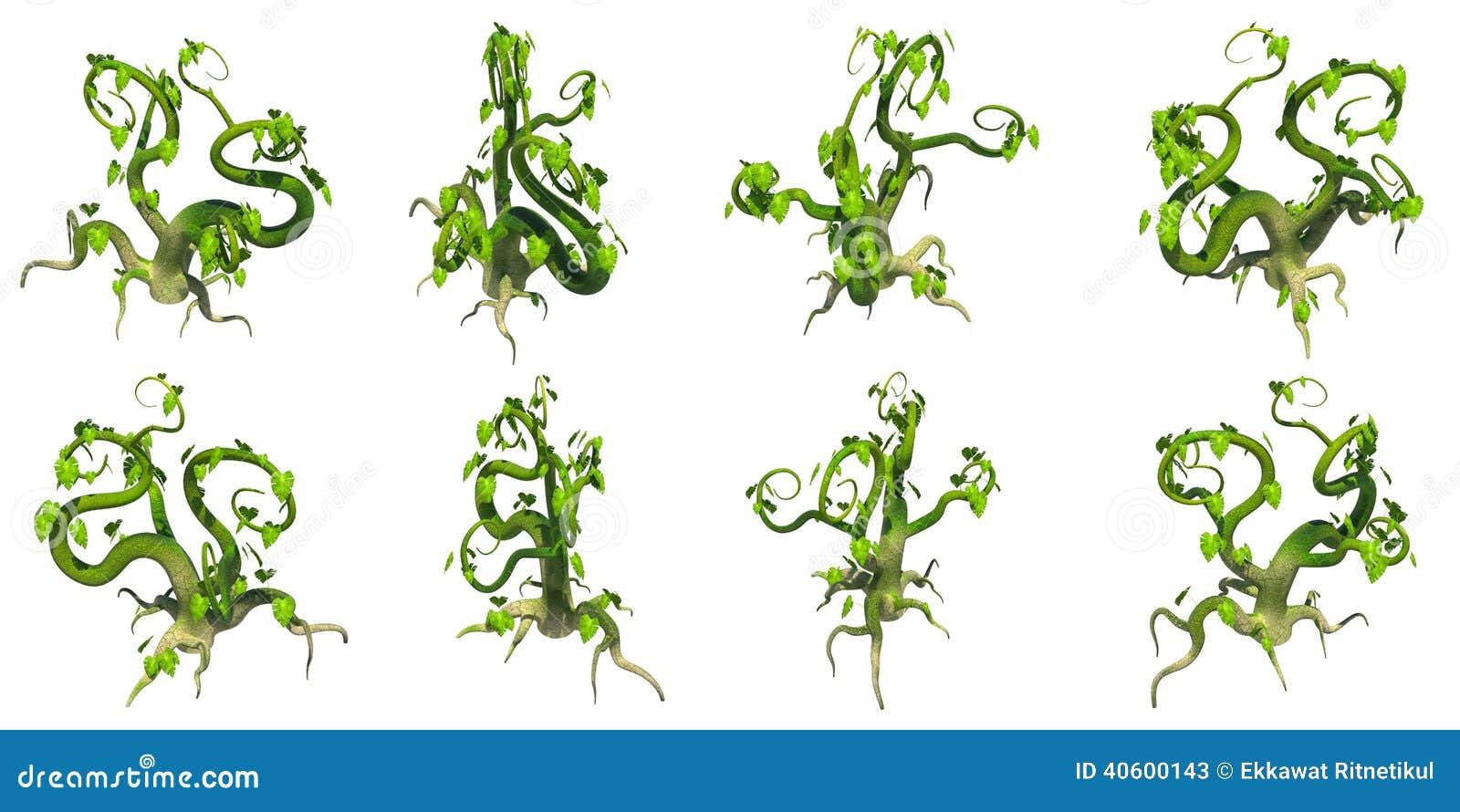 Plante Grimpante Stylisée Fond Transparent De Png Image