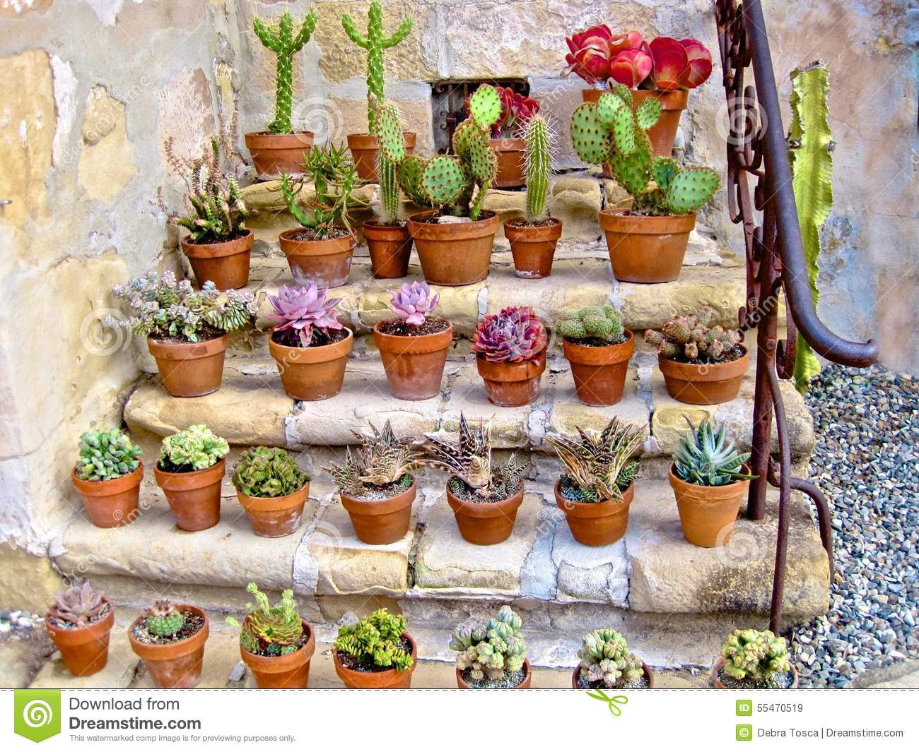 plante le cactus mis en pot de succulents photo stock image 55470519. Black Bedroom Furniture Sets. Home Design Ideas