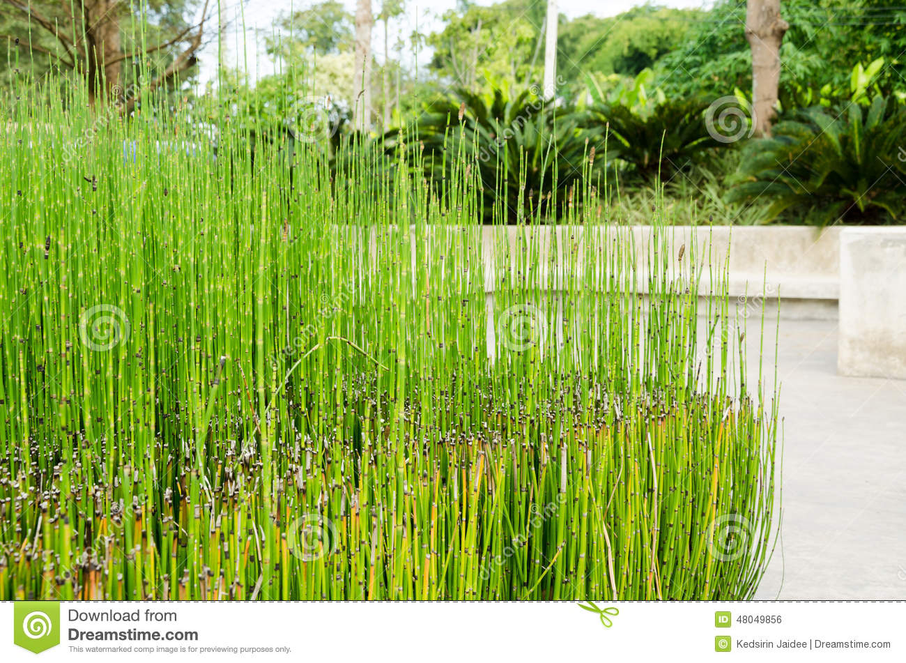 Plante ornementale dans le jardin ext rieur photo stock for Plante exterieur jardin