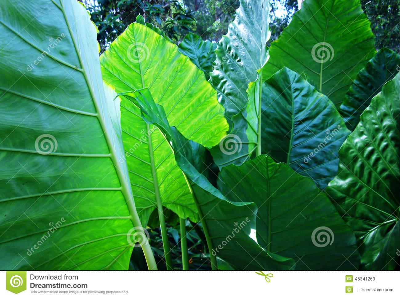Plante tropicale verte photo stock image 45341263 for Grandes plantes vertes