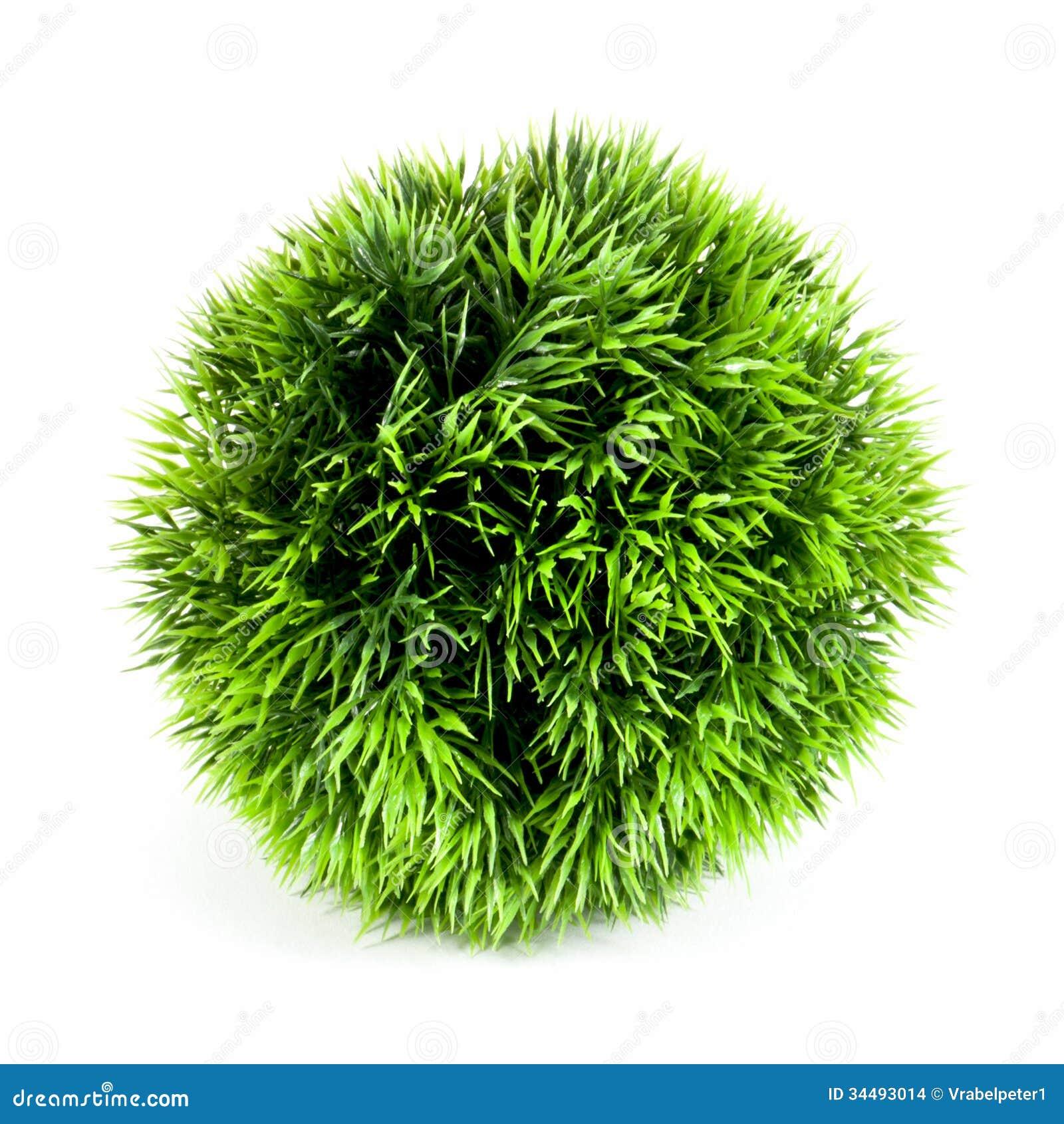 plante verte boule