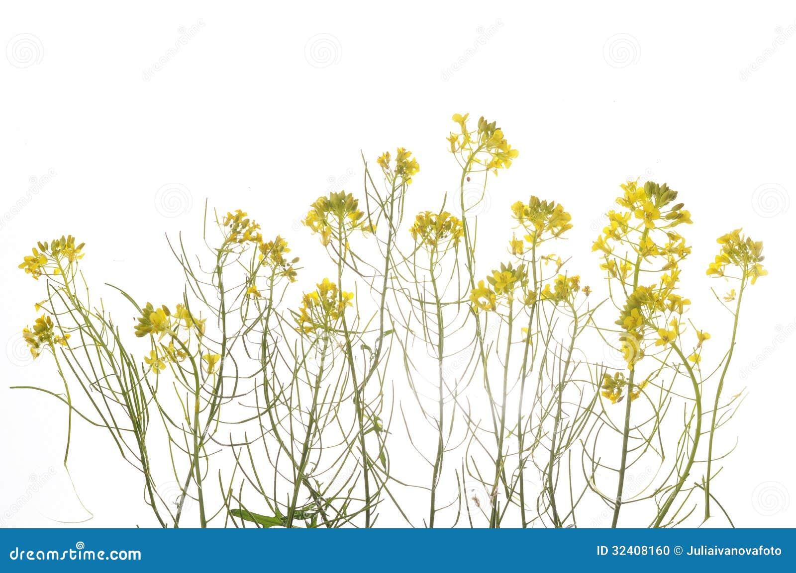 Plante verte avec les fleurs jaunes photo stock image for Plantes vertes