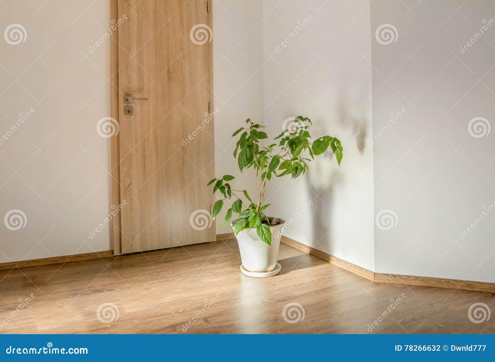 Plante Verte Dans La Chambre Vide Photo Stock Image Du
