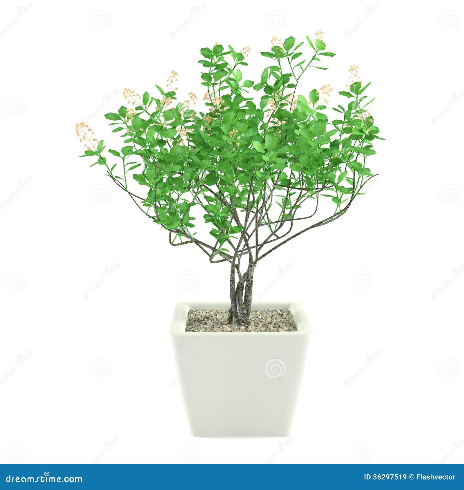 plante verte dans le pot d 39 isolement images libres de droits image 36297519. Black Bedroom Furniture Sets. Home Design Ideas