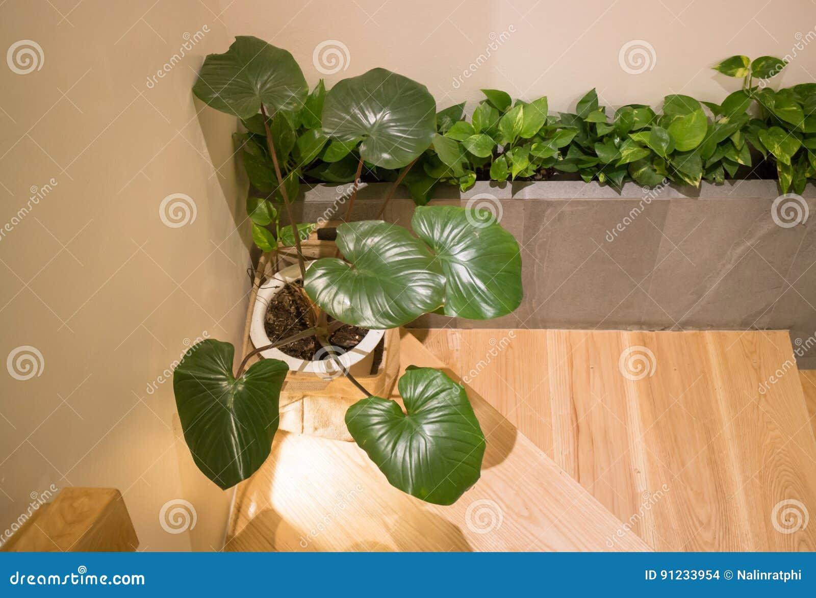 plante verte dans le style minimal de chambre photo stock. Black Bedroom Furniture Sets. Home Design Ideas