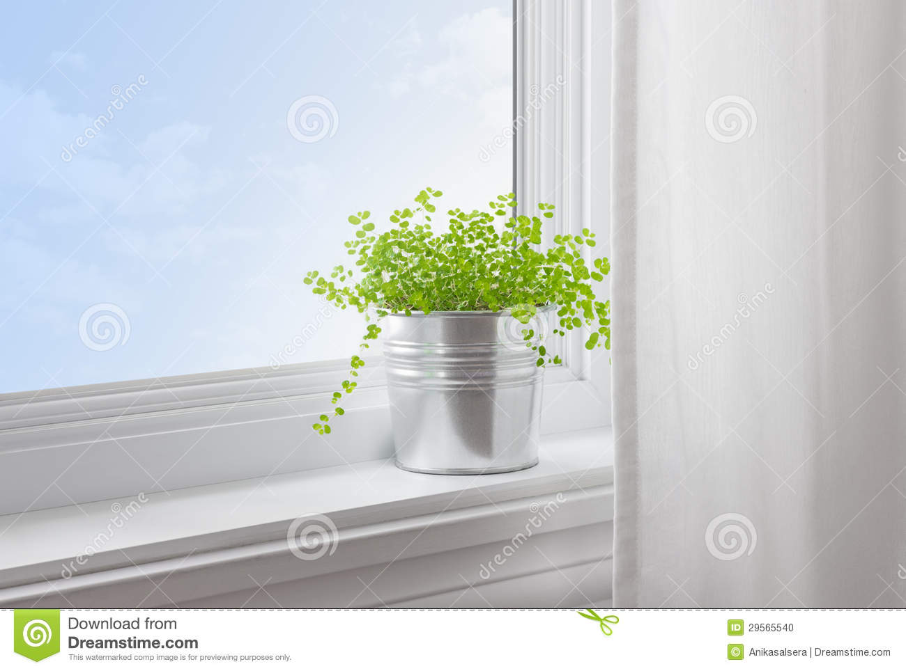 Plante verte dans une maison moderne photo stock image for Plante maison