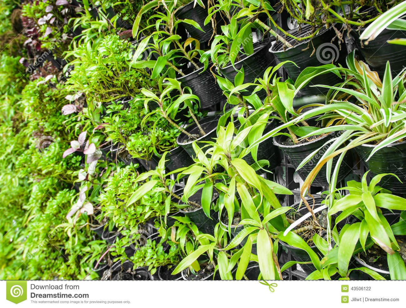 Plante verte de ferme verticale photo stock image du for Plante verte