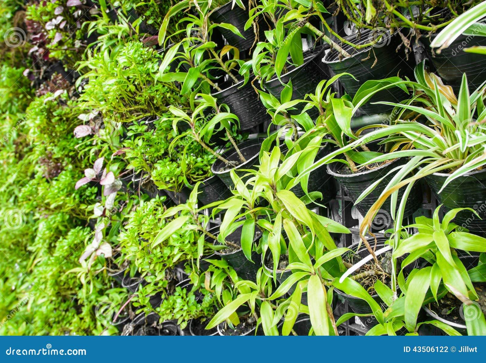 plante verte de ferme verticale photo stock image du centrale petit 43506122. Black Bedroom Furniture Sets. Home Design Ideas