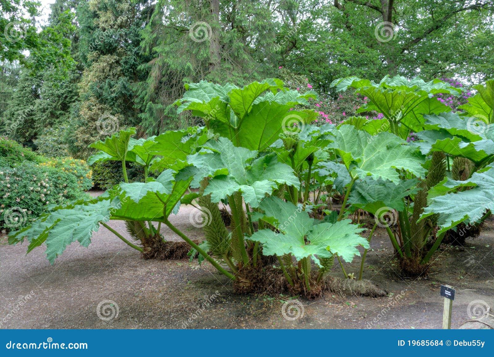 Plante verte exotique images stock image 19685684 for Grande plante verte exterieur