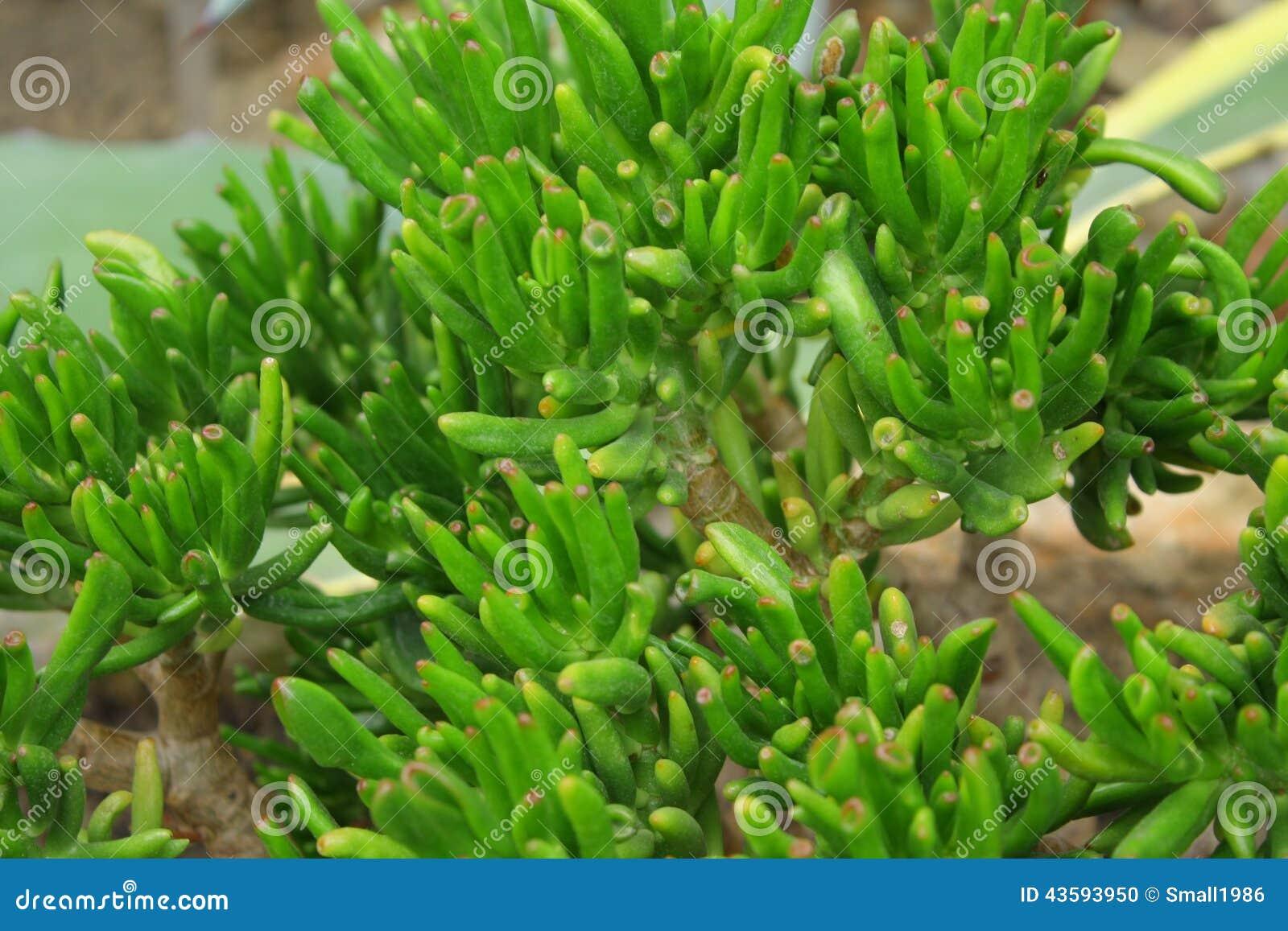 plante verte exotique photo stock image du exotique 43593950. Black Bedroom Furniture Sets. Home Design Ideas