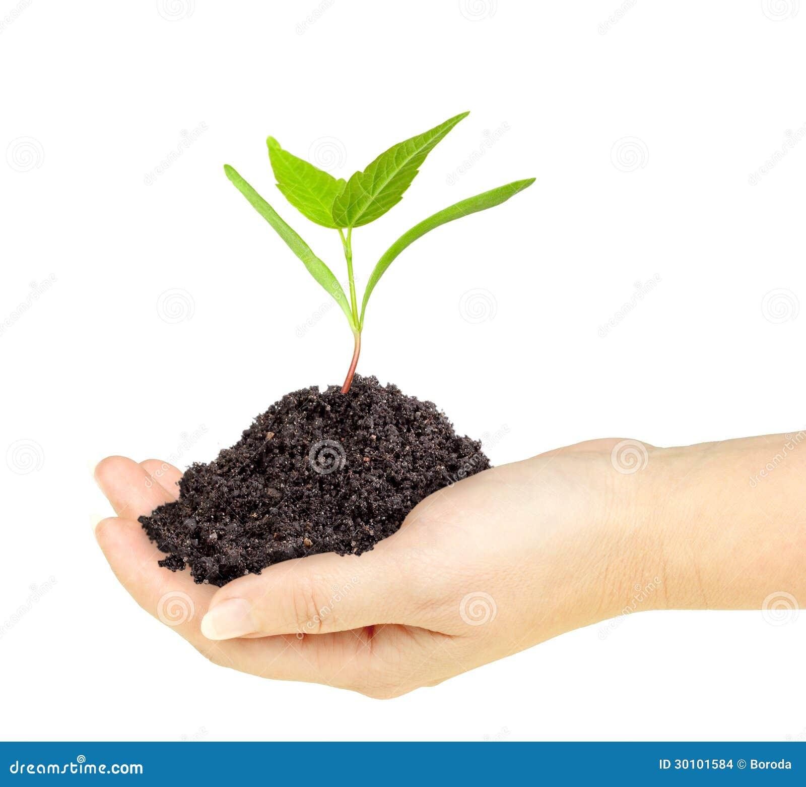Plante verte avec la salet dans une main images stock for La plante verte
