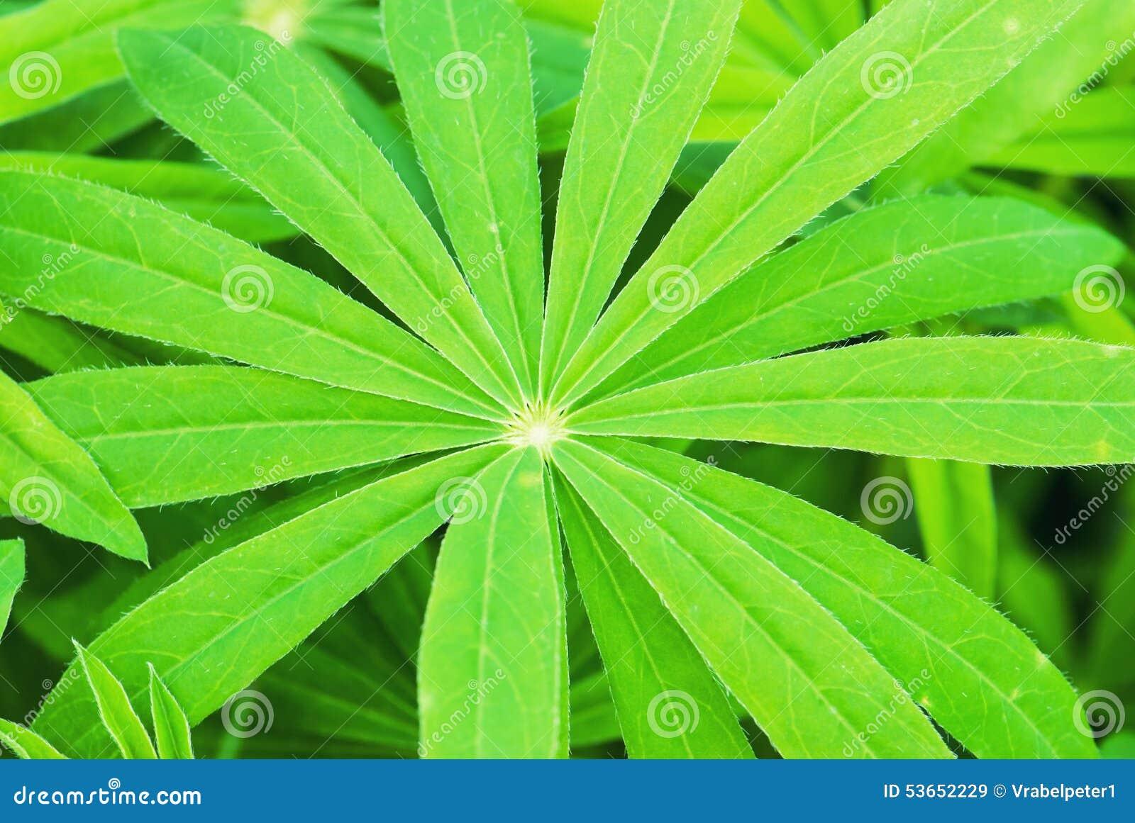 Plante verte tropicale image stock image du arbre frais for Plante verte