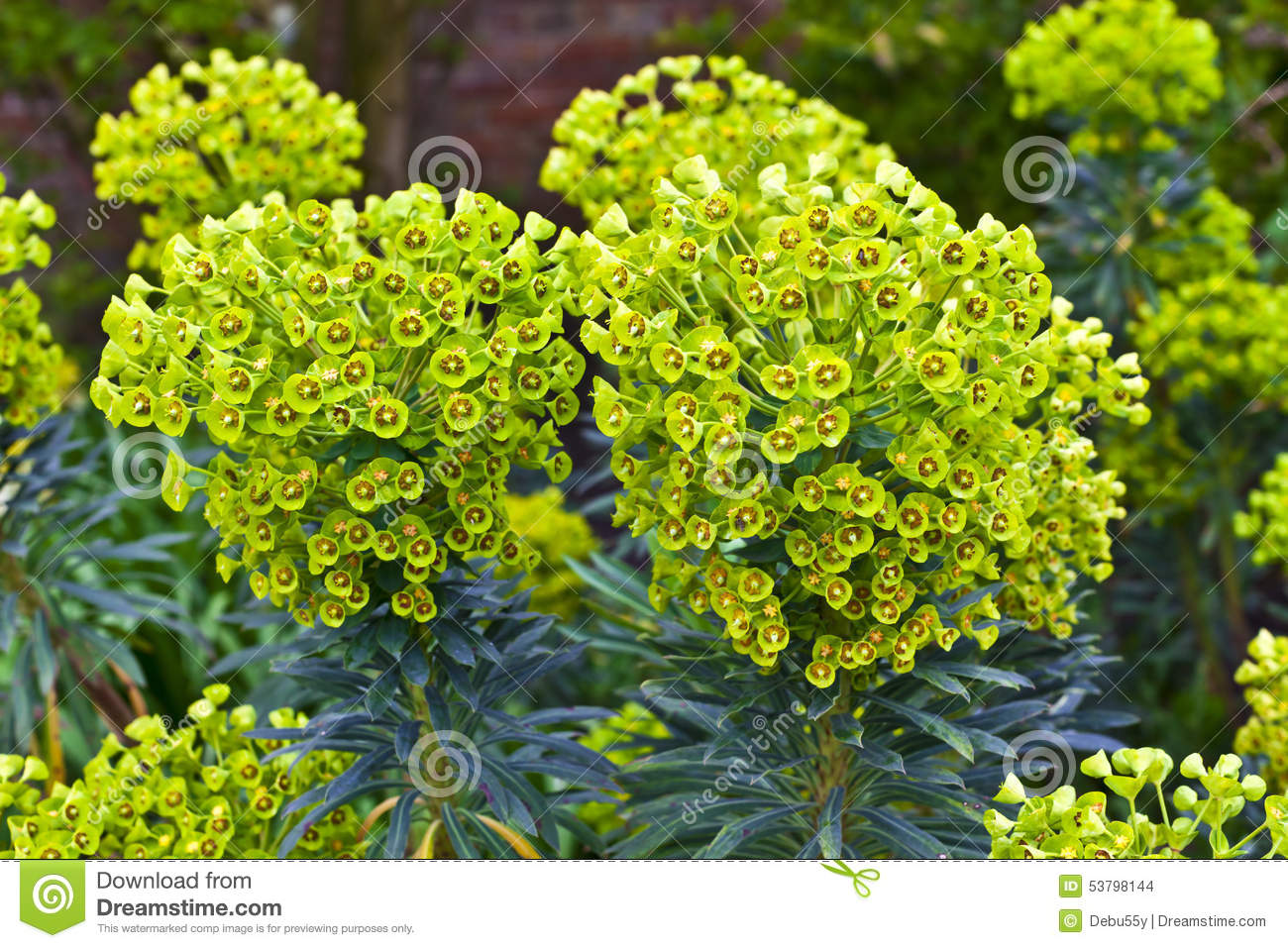 Plante vivace dans un jardin photo stock image 53798144 for Plante jardin