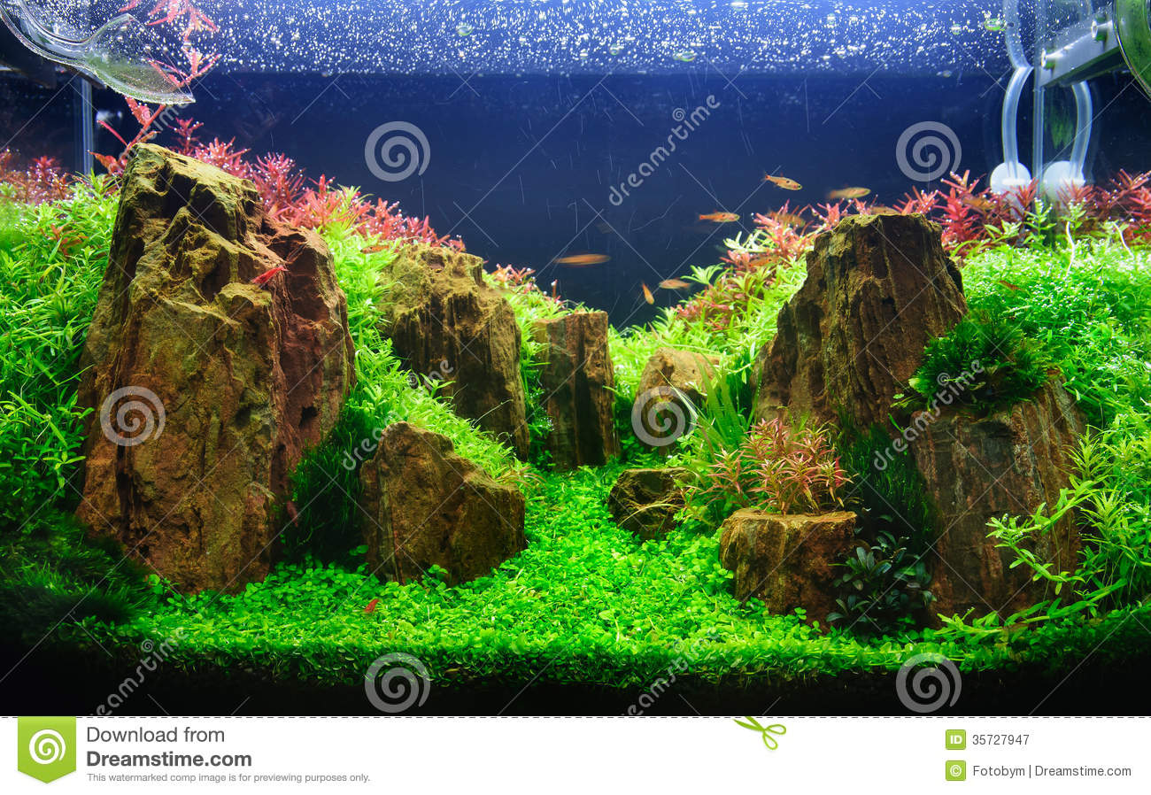 Planted Aquarium With Rocks Royalty Free Stock Photography - Image ...
