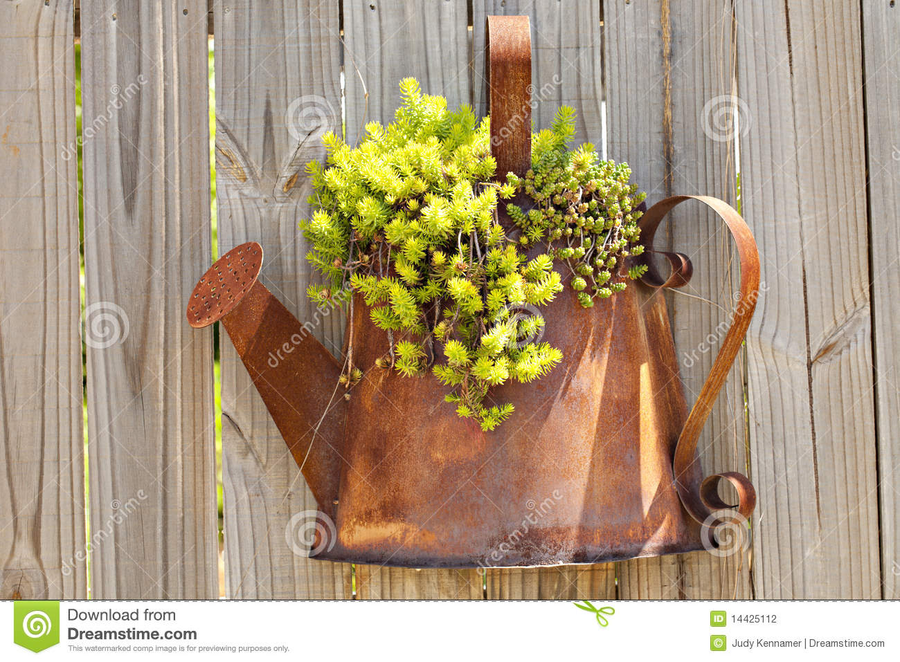 planter hanging on fence stock photo  image of plant