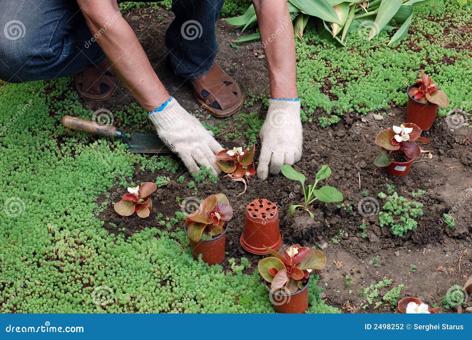 Plantera plantor