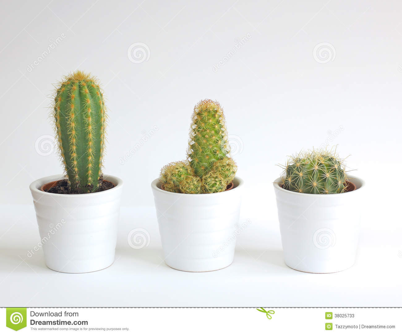 plantes d 39 int rieur de cactus photos stock image 38025733. Black Bedroom Furniture Sets. Home Design Ideas