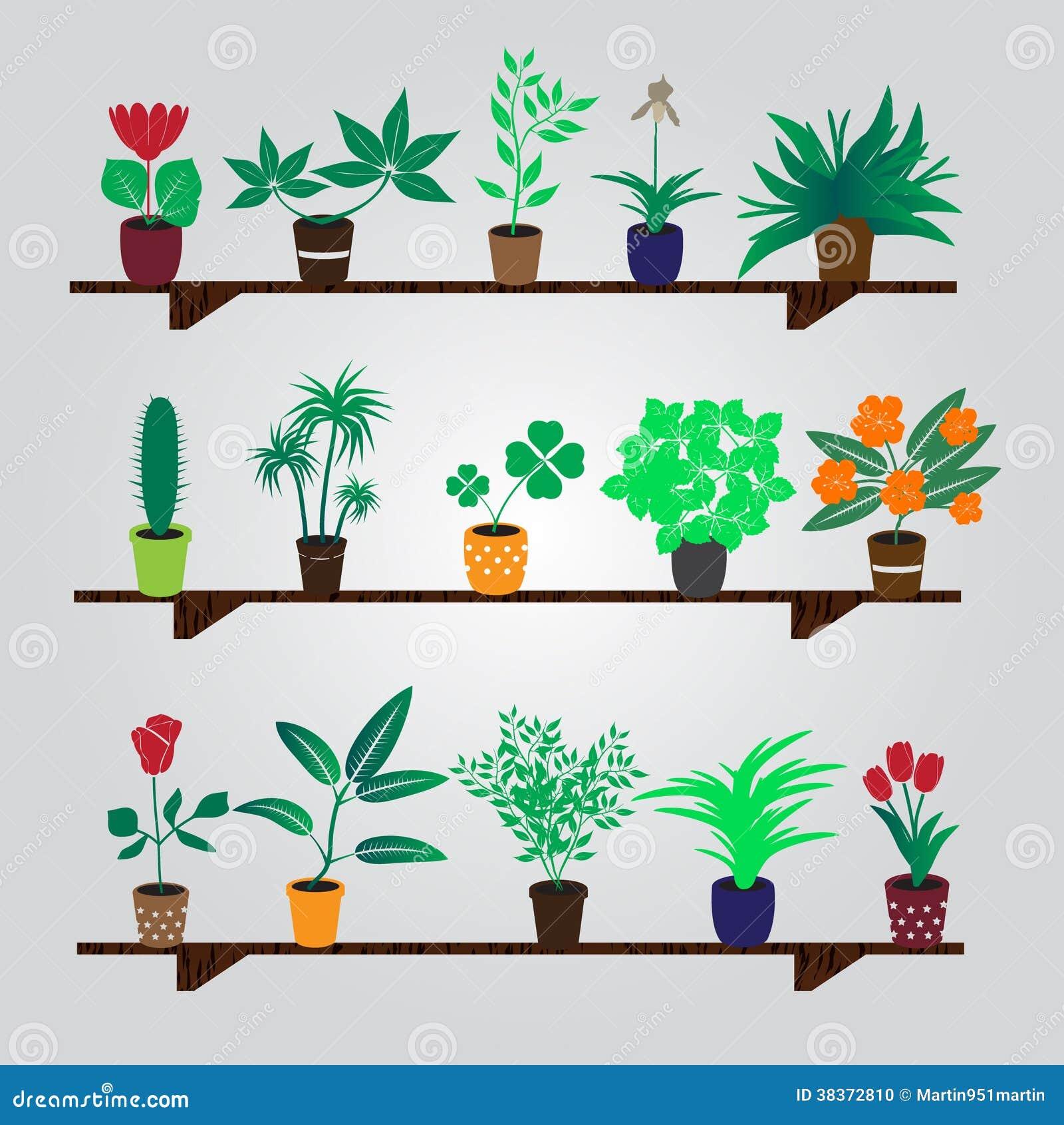 Plantes d intérieur et fleurs à la maison dans le pot sur l étagère photo stock