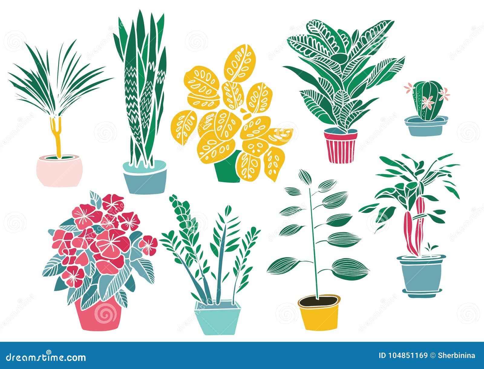 Plantes D Intérieur Et Fleurs Dessin De Main Ensemble