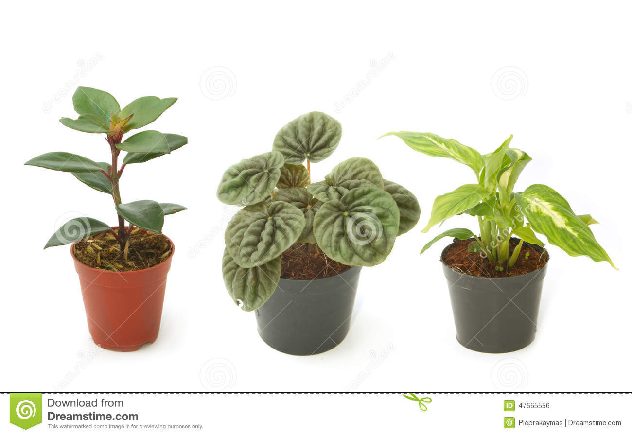 Plantes d 39 int rieur vertes assorties dans des pots photo for Plantes vertes